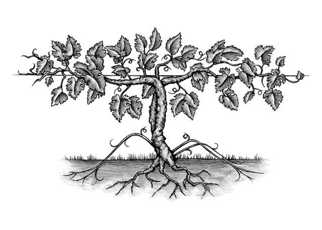Steven Noble Illustrations: Vine