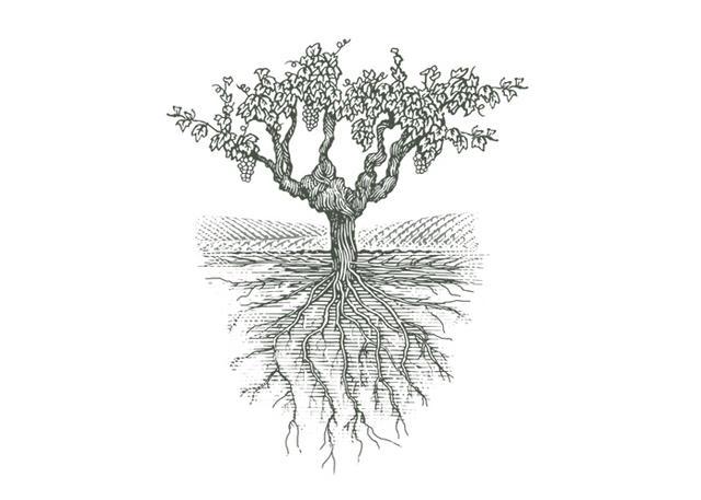 Steven Noble Illustrations: Old Grape Vine