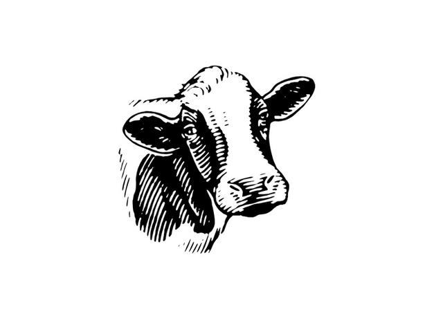 Steven Noble Illustrations: Cow