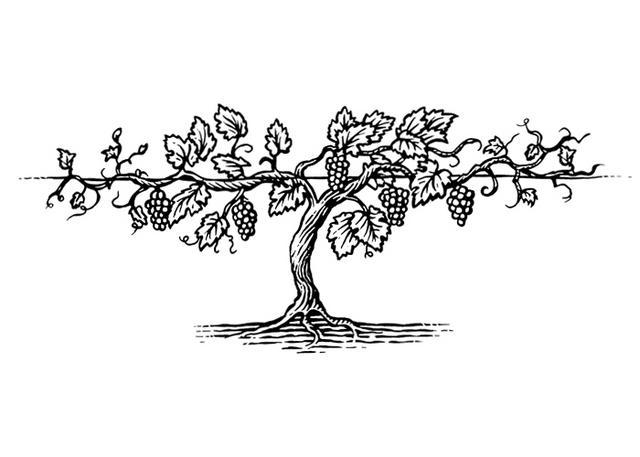 Steven Noble Illustrations: Grapevine Woodcut