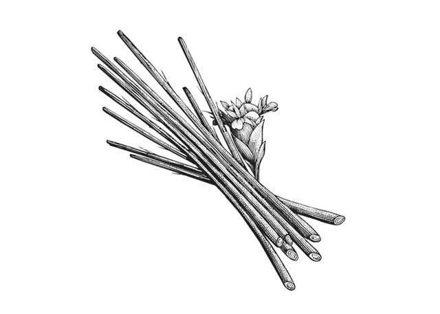 steven noble illustrations lemongrass