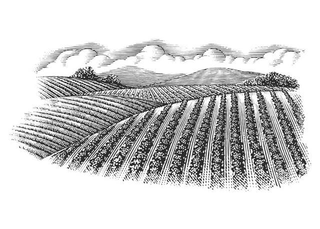Steven Noble Illustrations Agricultural Landscape