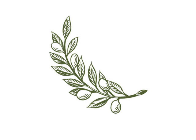 steven noble illustrations olive branch. Black Bedroom Furniture Sets. Home Design Ideas