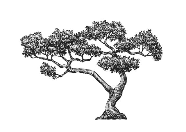 Steven Noble Illustrations Bonsai Tree