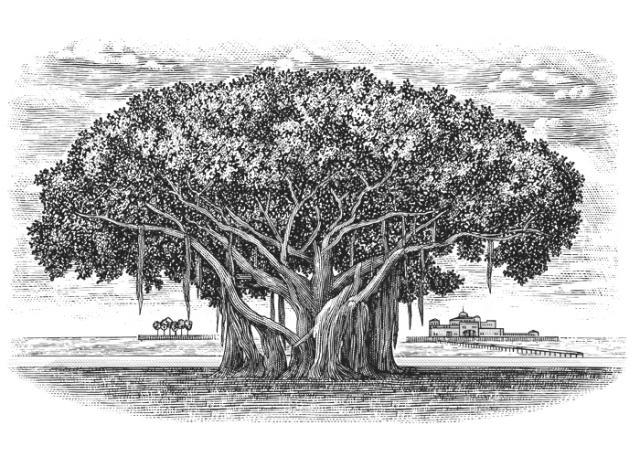 Steven Noble Illustrations Banyan Tree