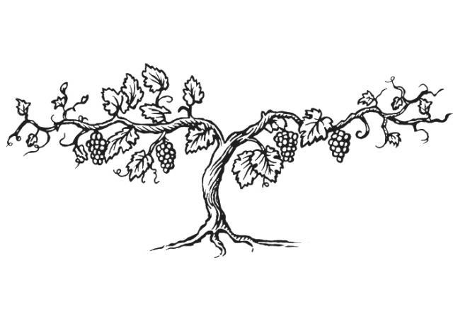 Steven Noble Illustrations Grapevine Tree