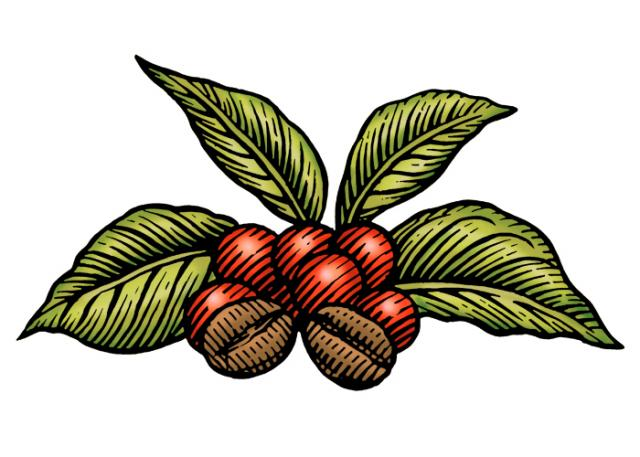 Steven Noble Illustrations: Coffee Plant