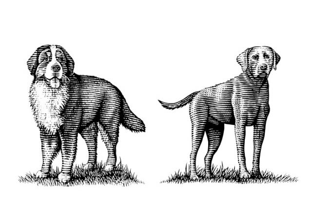 Dog-Illustrations-