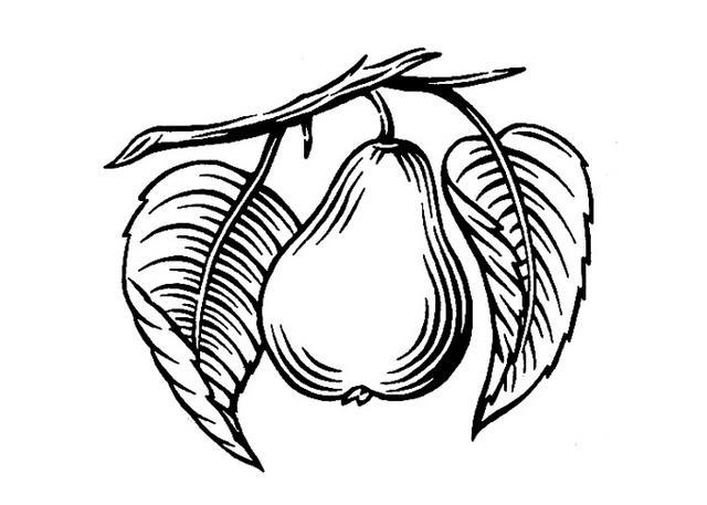 Steven Noble Illustrations: Pear Icon