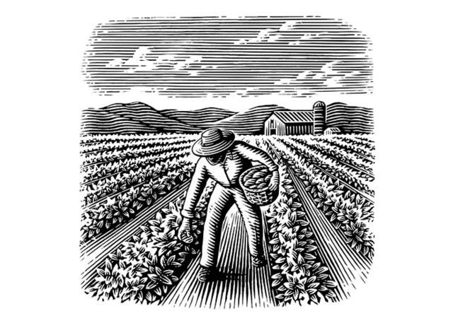 Steven Noble Illustrations Potato Farmer