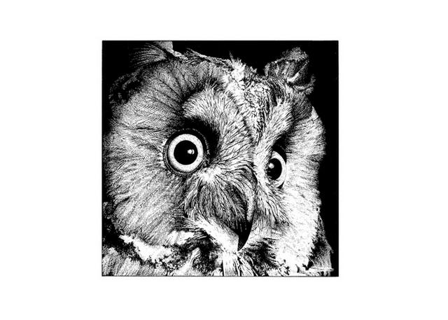 Owl stipple