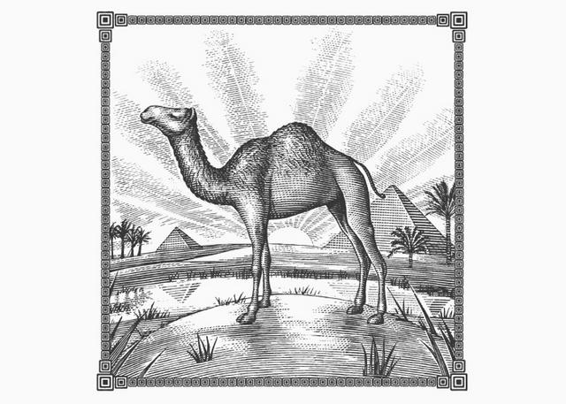 Camel Egyptian