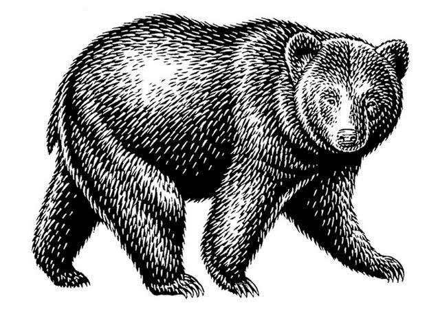 Steven Noble Illustrations Black Bear