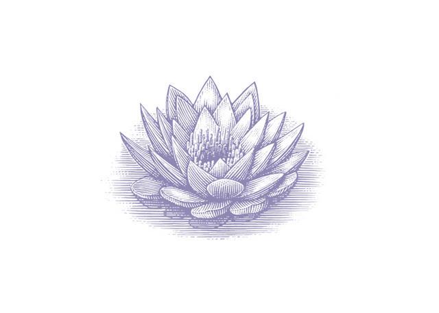 Steven Noble Illustrations Blue Lotus Flower