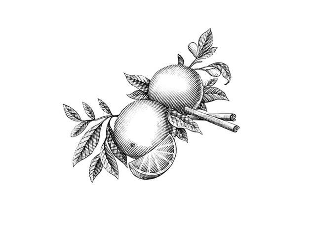 Steven Noble Illustrations: Pommander Etching