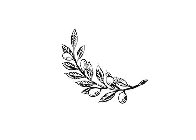 steven noble illustrations olive branch stock. Black Bedroom Furniture Sets. Home Design Ideas