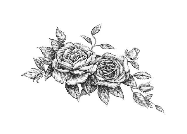 Steven Noble Illustrations: Roses Botanical Engraving